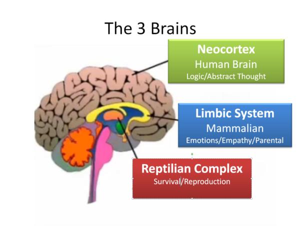 Triune Brain: Reptilian Stem, Limbic System and Neocortex