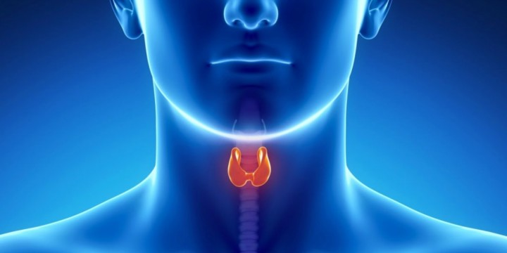 Treat hypothyroidism with Ayurveda, Naturopathy, and Homeopathy