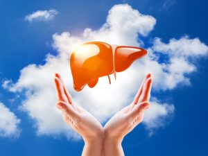 Concentrate on the Health of Your Liver for Healthy Life