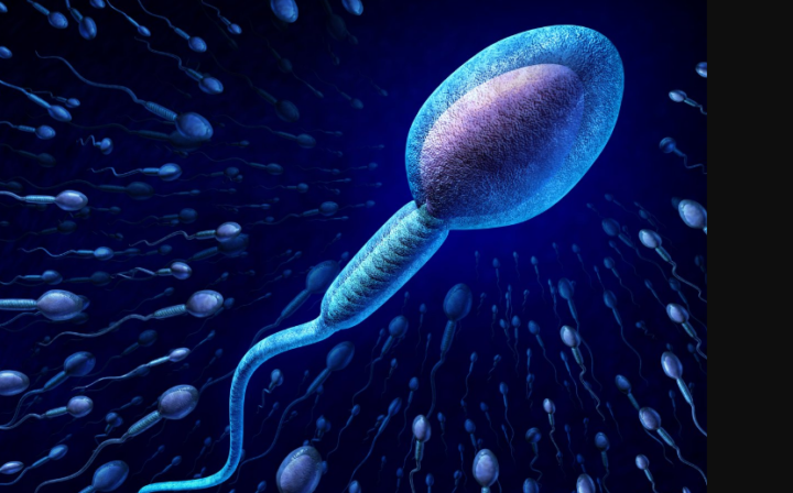 Keep your sperm healthy the natural way